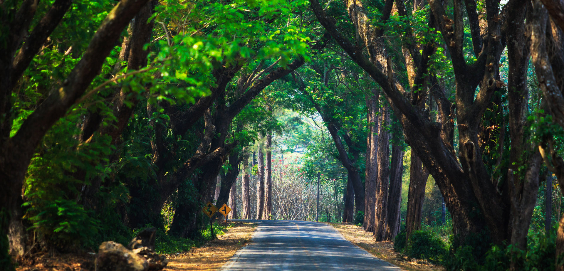 Beautiful street in covered with arched tree branches